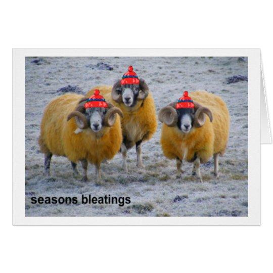 cold sheep Xmas card