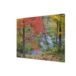 Coles Creek lined with autumn maple trees near Canvas Print