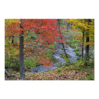 Coles Creek lined with autumn maple trees near Photo Print