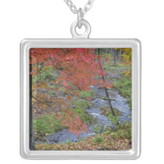 Coles Creek lined with autumn maple trees near Silver Plated Necklace