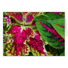 Coleus art card