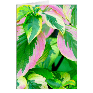 COLEUS/PINK &GREEN/PAINTED LOOK/PHOTOG. NOTE CARD
