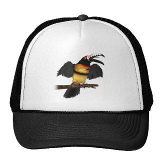 Collared Aracari Toucan Hats