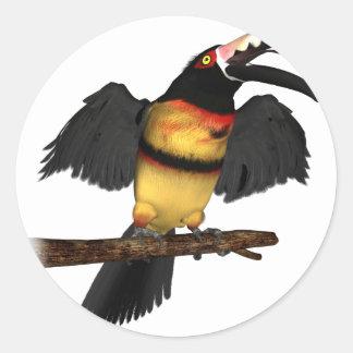 Collared Aracari Toucan Round Sticker