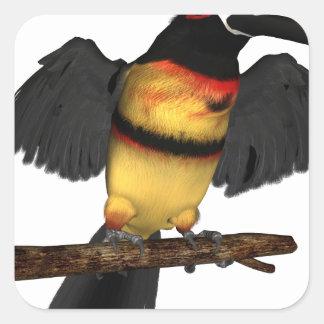 Collared Aracari Toucan Square Sticker