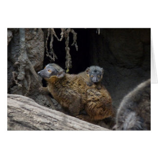 Collared Brown Lemur with Baby Greeting Card