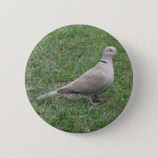 Collared Dove Button