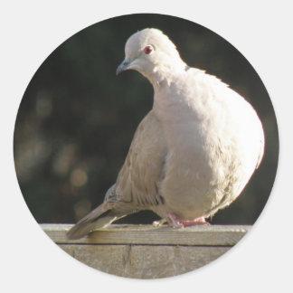 Collared Dove Sticker