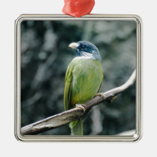 Collared Finch Bellied Bulbul Christmas Tree Ornament