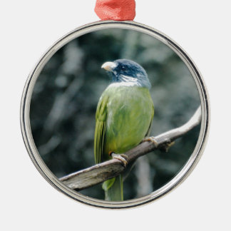 Collared Finch Bellied Bulbul Christmas Tree Ornaments