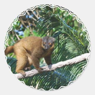 Collared Lemur Sticker