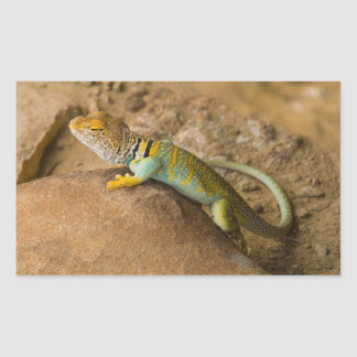 Collared Lizard Rectangular Sticker