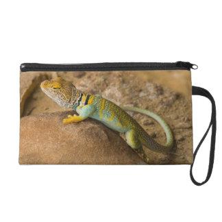 Collared Lizard Wristlet