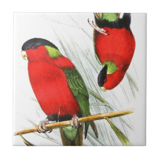 Collared Lory Small Square Tile