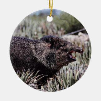 Collared peccary (javelina) yawning amid flowering christmas ornament