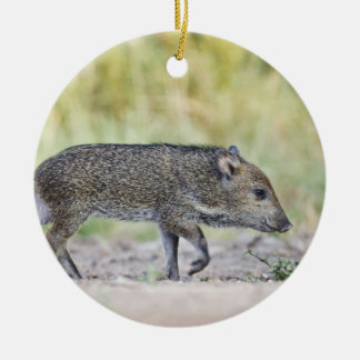 Collared peccary juvenile round ceramic decoration
