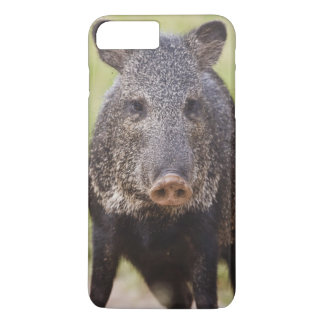 Collared Peccary Pecari tajacu) adults, Santa iPhone 8 Plus/7 Plus Case