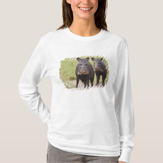 Collared Peccary Pecari tajacu) adults, Santa T-Shirt