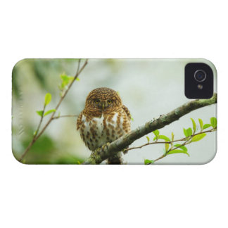 Collared pigmy owlet perching on tree branch, iPhone 4 Case-Mate cases