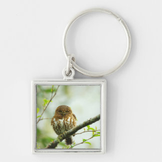 Collared pigmy owlet perching on tree branch, Silver-Colored square key ring