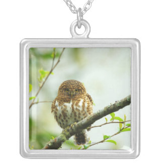 Collared pigmy owlet perching on tree branch, silver plated necklace
