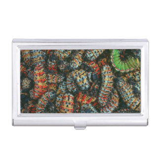 Collection Of Mopane Worms (Imbrassia Belina) Business Card Holders