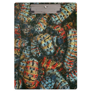 Collection Of Mopane Worms (Imbrassia Belina) Clipboard