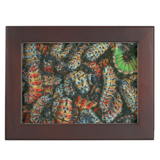 Collection Of Mopane Worms (Imbrassia Belina) Keepsake Box