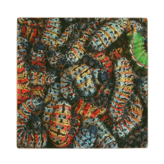 Collection Of Mopane Worms (Imbrassia Belina) Wood Coaster