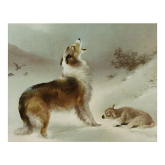 Collie and sheep poster