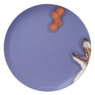 Collie catching plastic bone dinner plate