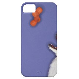 Collie catching plastic bone iPhone 5 cover