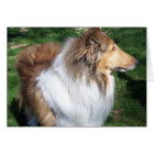 COLLIE-DAY CARD