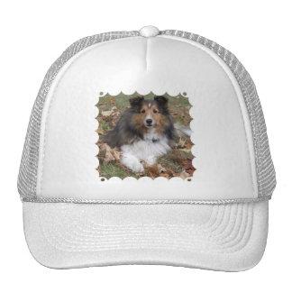 Collie Dog Baseball Hat