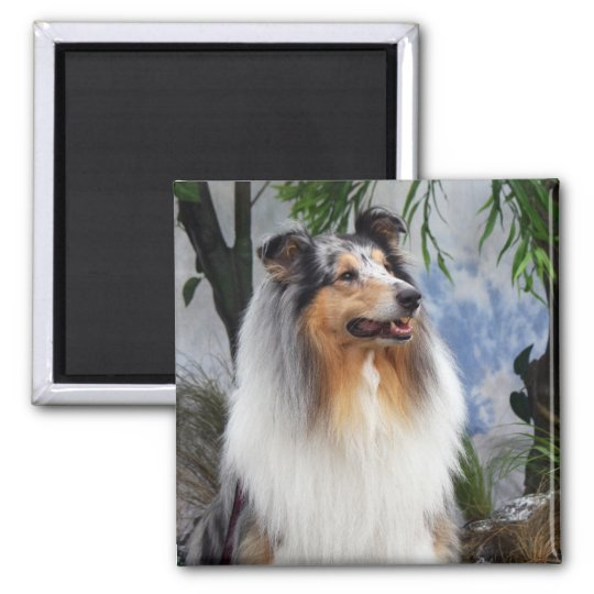 Collie dog blue merle fridge magnet, gift idea