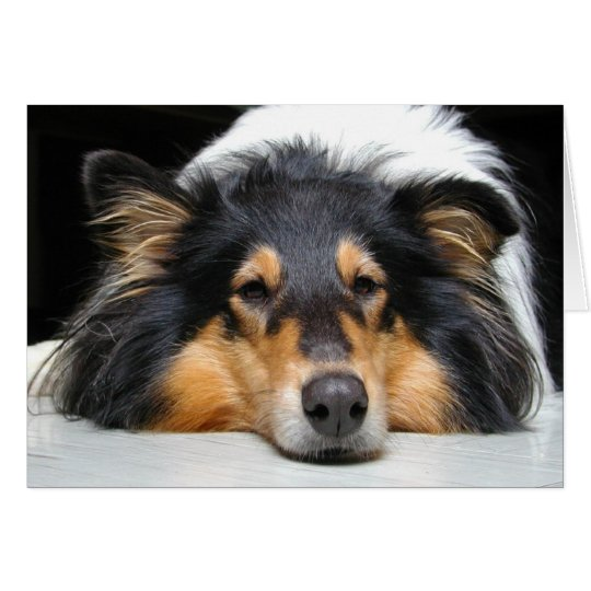 Collie dog nose tri colour blank greeting card