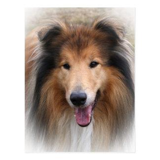 collie dog postcard
