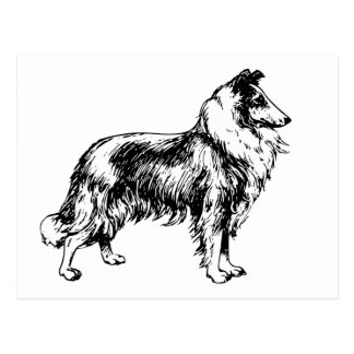 collie rough dog beautiful illustration postcard