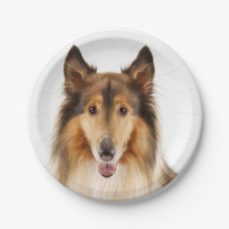 Collie Tan &  Black & White Puppy Dog Paper Plate