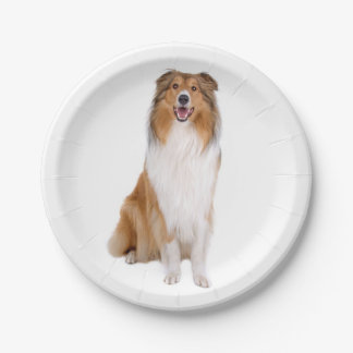 Collie Tan & White Puppy Dog Paper Plate