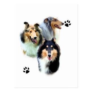 Collie Trio Postcard
