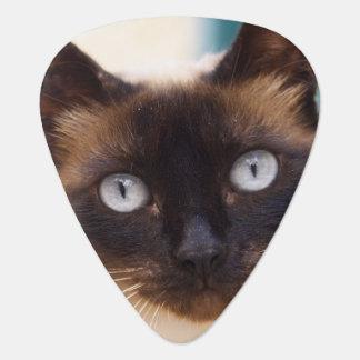 Collioure. Roussillon. A street cat. France. Guitar Pick