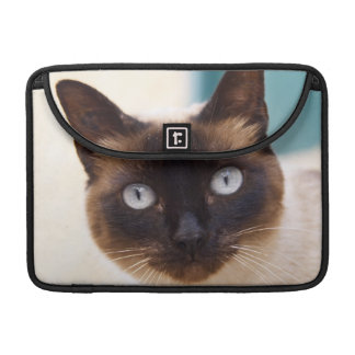 Collioure. Roussillon. A street cat. France. MacBook Pro Sleeves