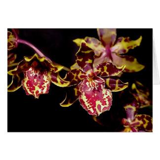 Colmanara Wildcat Orchid Card