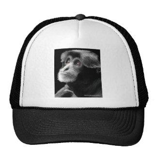 Colobus2 Hat
