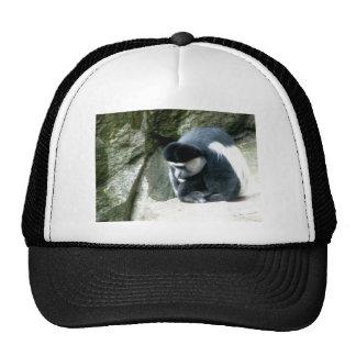 Colobus Trucker Hat