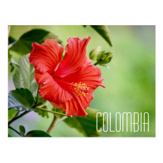 colombia hibiscus flower postcard