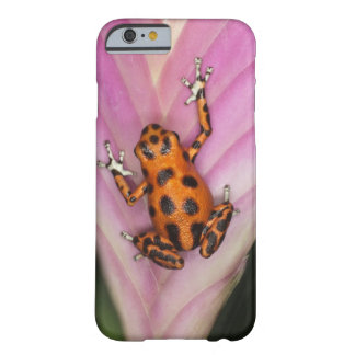 Colon Isle Dart Frog, Oophaga pumilio Barely There iPhone 6 Case