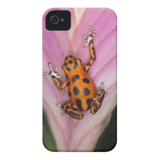 Colon Isle Dart Frog, Oophaga pumilio iPhone 4 Covers