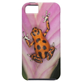 Colon Isle Dart Frog, Oophaga pumilio iPhone 5 Covers